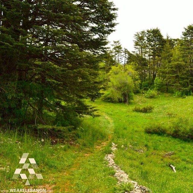 Good Morning from #Tannourine forest by Bassim Mahmoud #WeAreLebanon