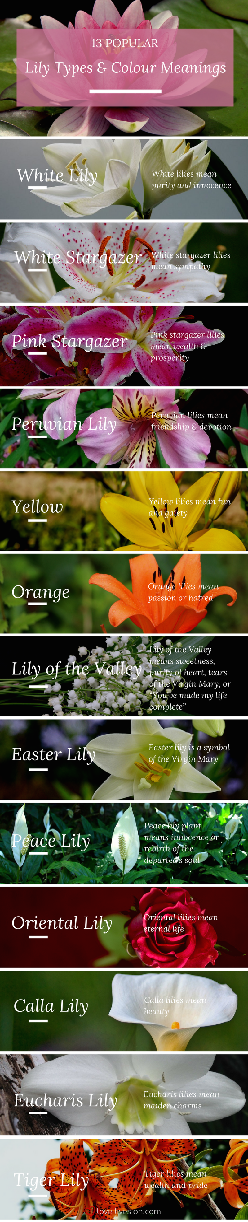 Meaning Of Flower Colors For A Funeral Coloringsite