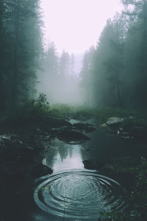 Forests | Mysterious morning fog over a creek in the pine woods