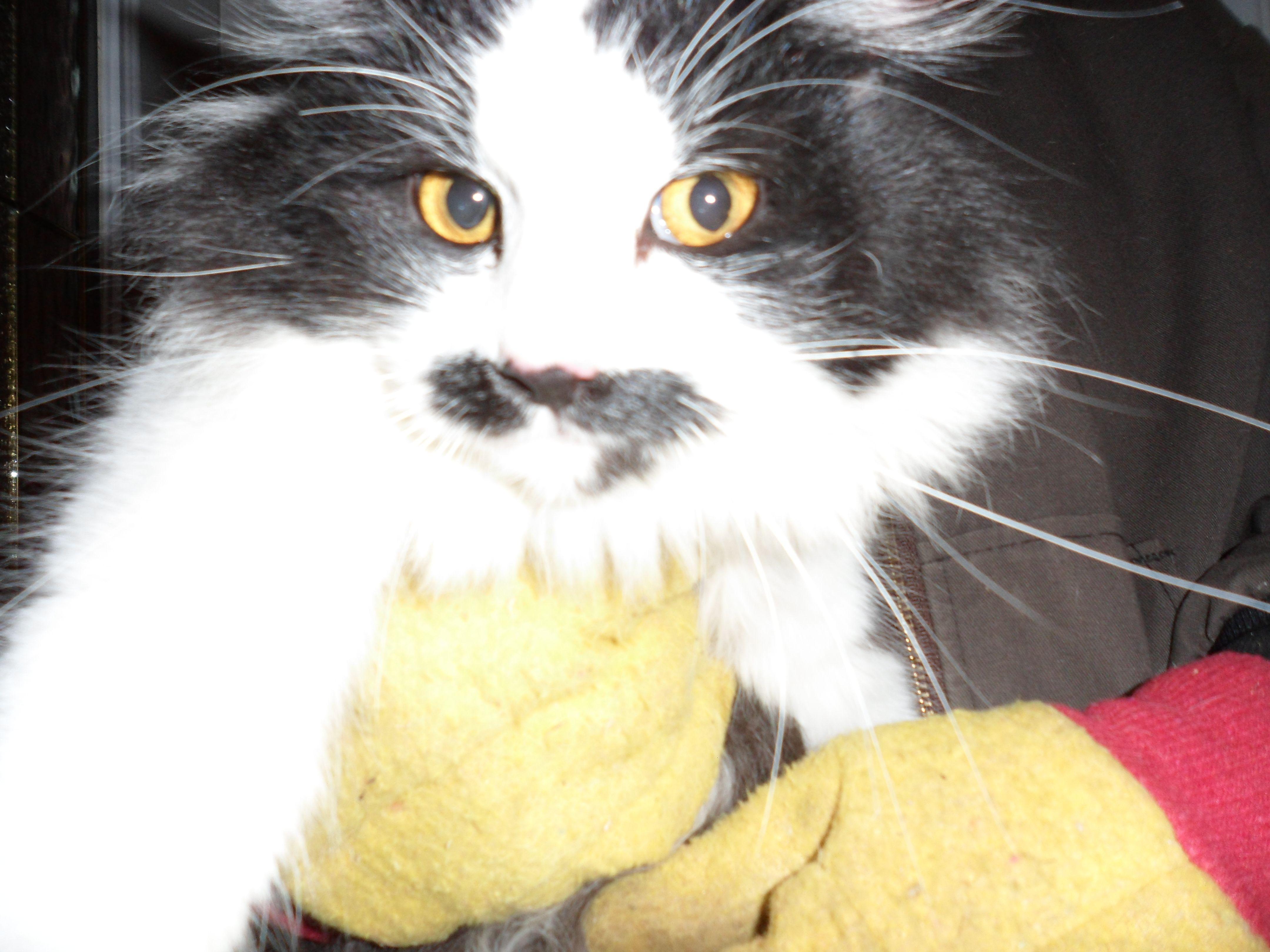 Harvetta ,Bill`s Barn Cat!