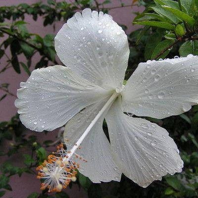 Pin On Kwiaty Doniczkowe
