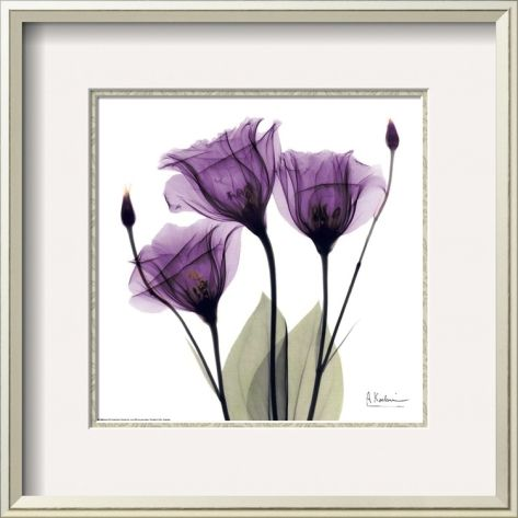 Royal Purple Gentian Trio Pre-made Frame by Albert Koetsier at Art.com
