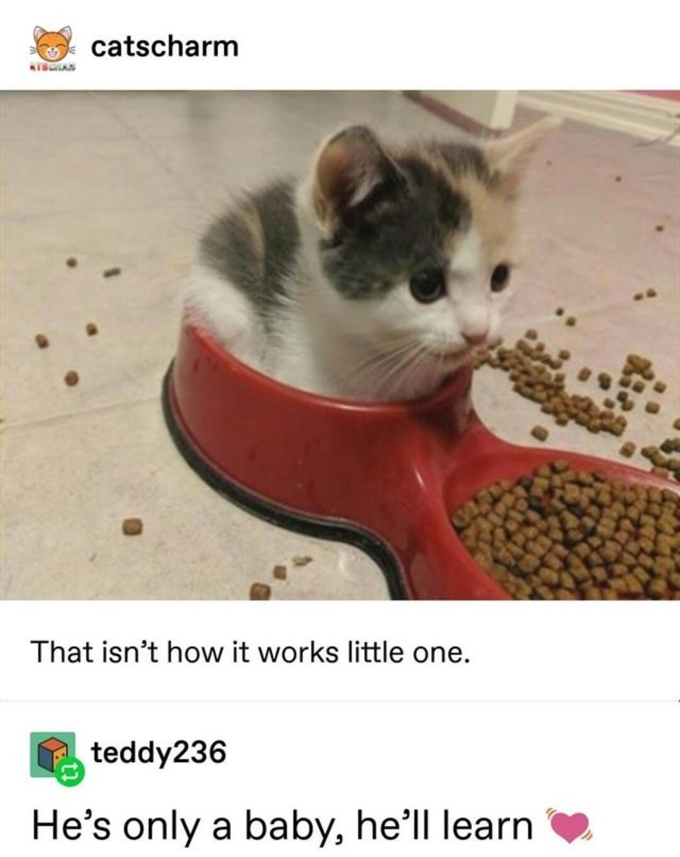 16 Animal Tumblr Posts That Are, Quite Simply, Very Cute