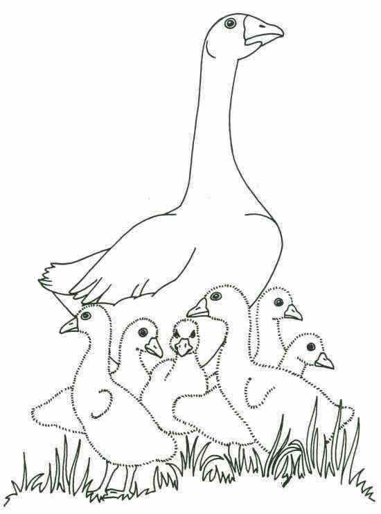 Pin On אווזים וברווזים