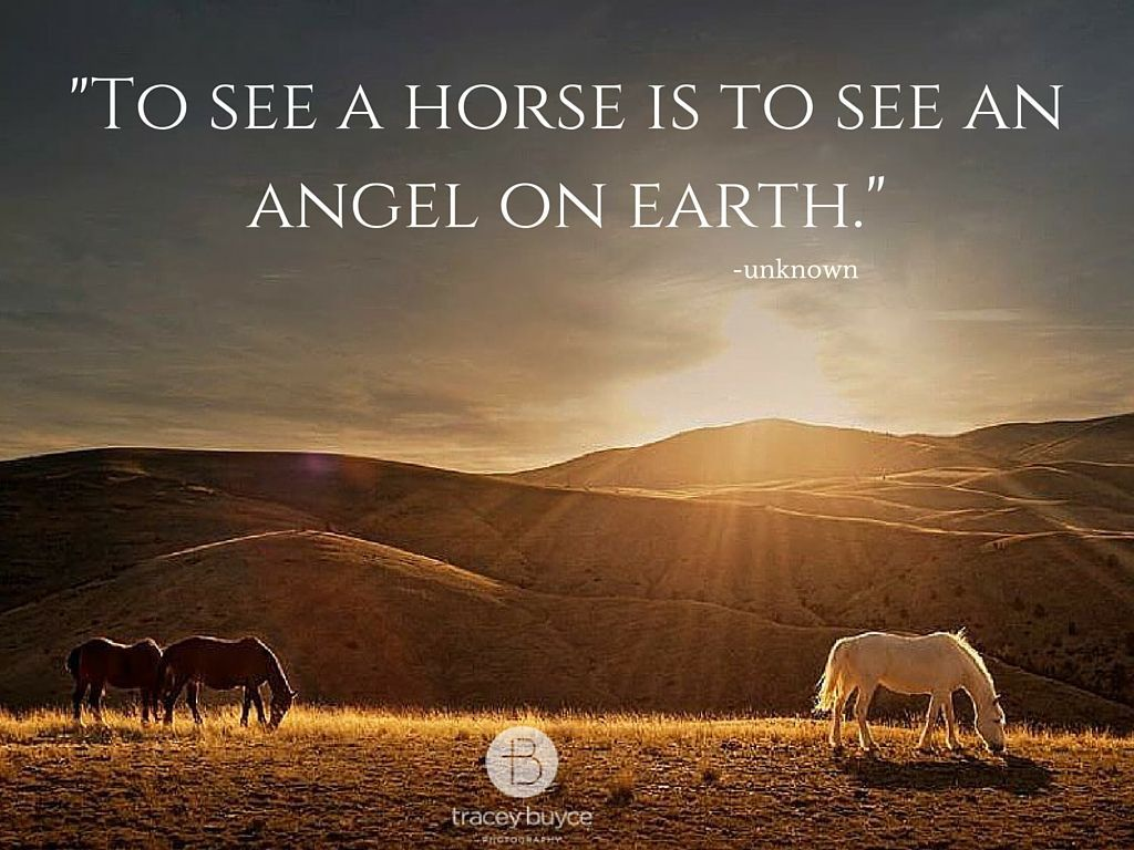 horse quotes with horses at sunset