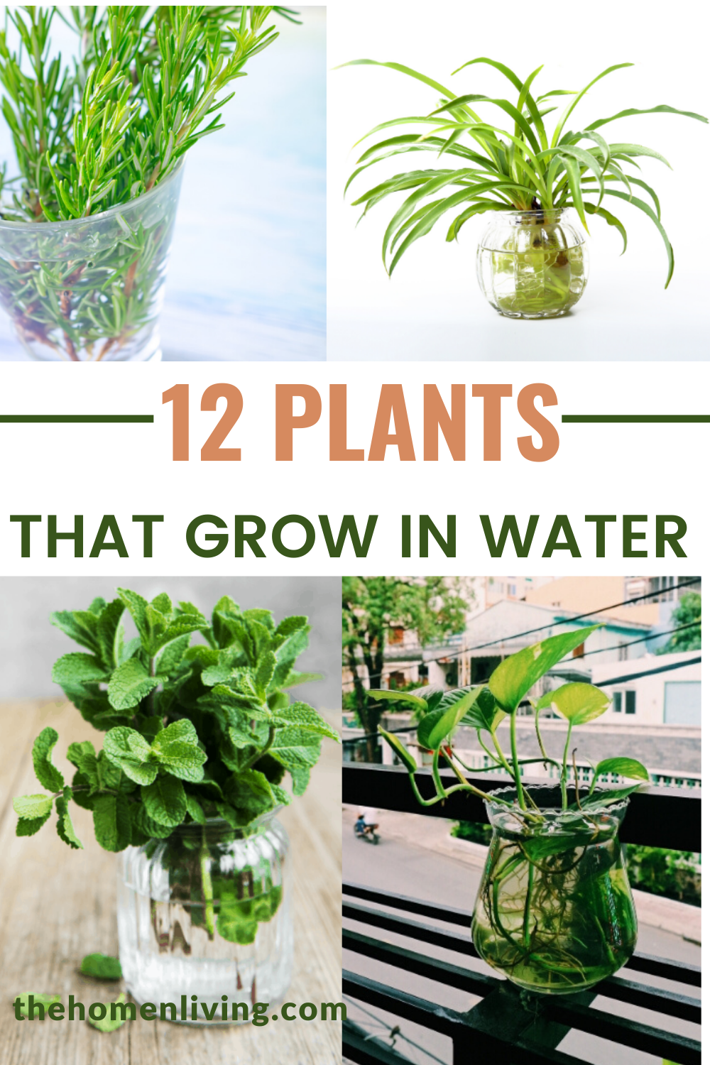 12 Houseplants That Can Grow In Water In 2020 Water Garden Plants Plants Grown In Water Growing Plants Indoors