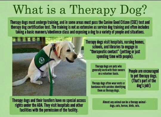 Pin By Teri Haase On Service Dogs Therapy Dogs Service Dog