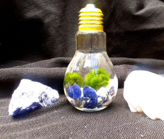 Lightbulb Aquatic terrarium with two marimo pet by