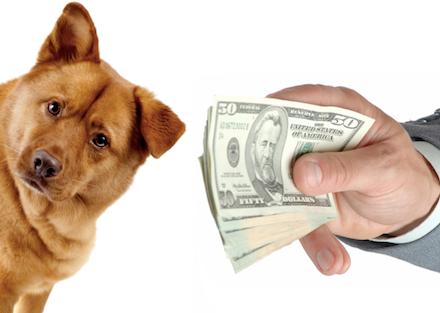 Online Veterinary Pharmacies Buyer Beware (With images