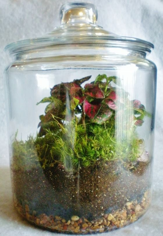 Polka Dot Terrarium Polka Dot Plant Moss Living Art Green Rose Quartz Pink  Gems $60.00