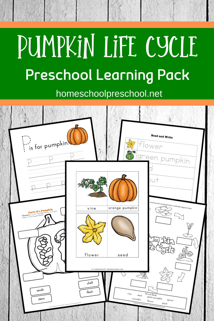 Preschool Life Cycle Of A Pumpkin Printable For Fall Life Cycles Preschool Pumpkin Life Cycle Kindergarten Life Cycles Kindergarten [ 1102 x 735 Pixel ]