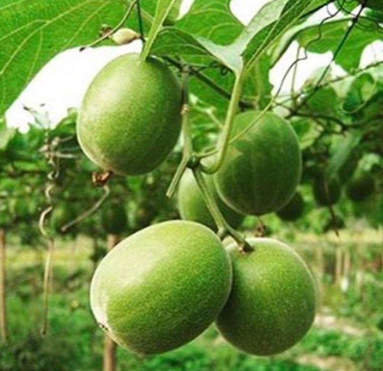 Is monk fruit a healthy alternative sweetener wellgood