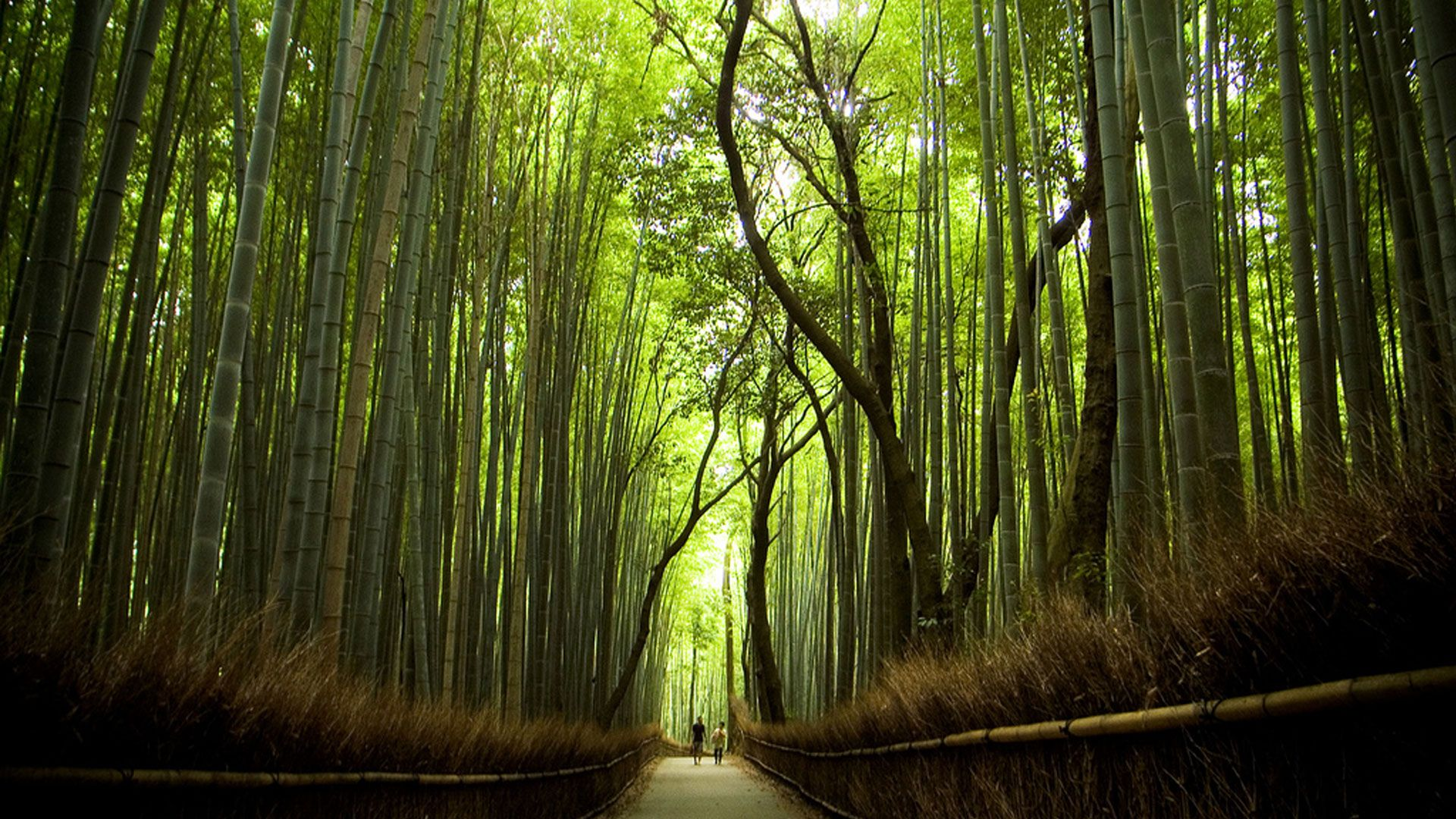 wallpaper sagano bamboo forest in japan [1920x1080] | high quality