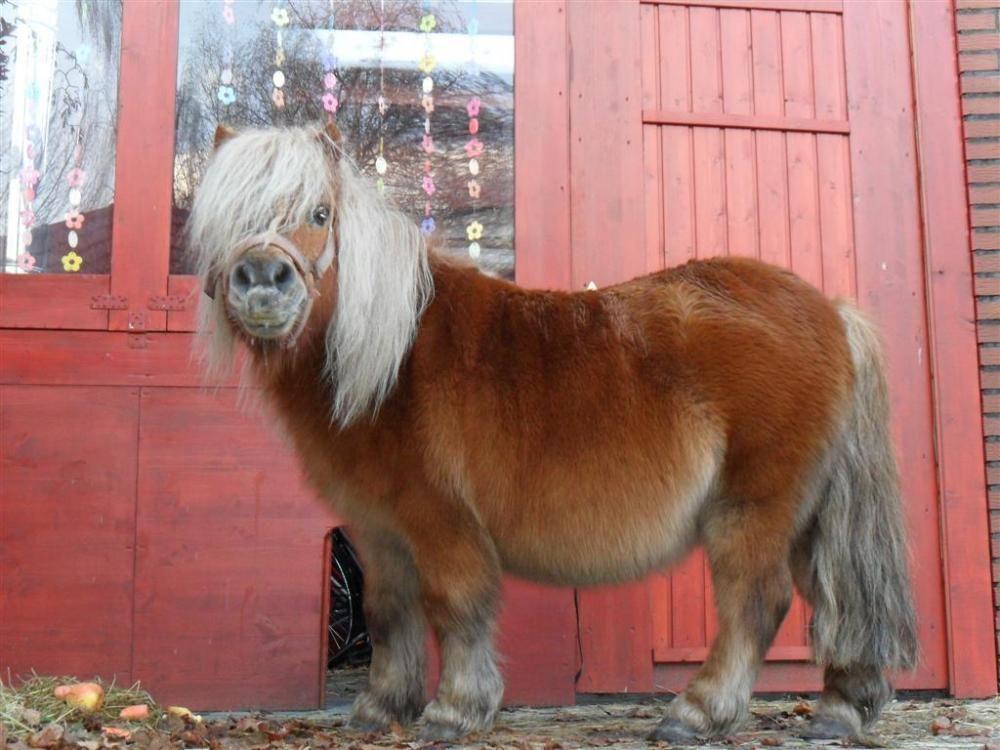 thelwell shetland pony poses pinterest pferde fohlen und kinderbasteln. Black Bedroom Furniture Sets. Home Design Ideas