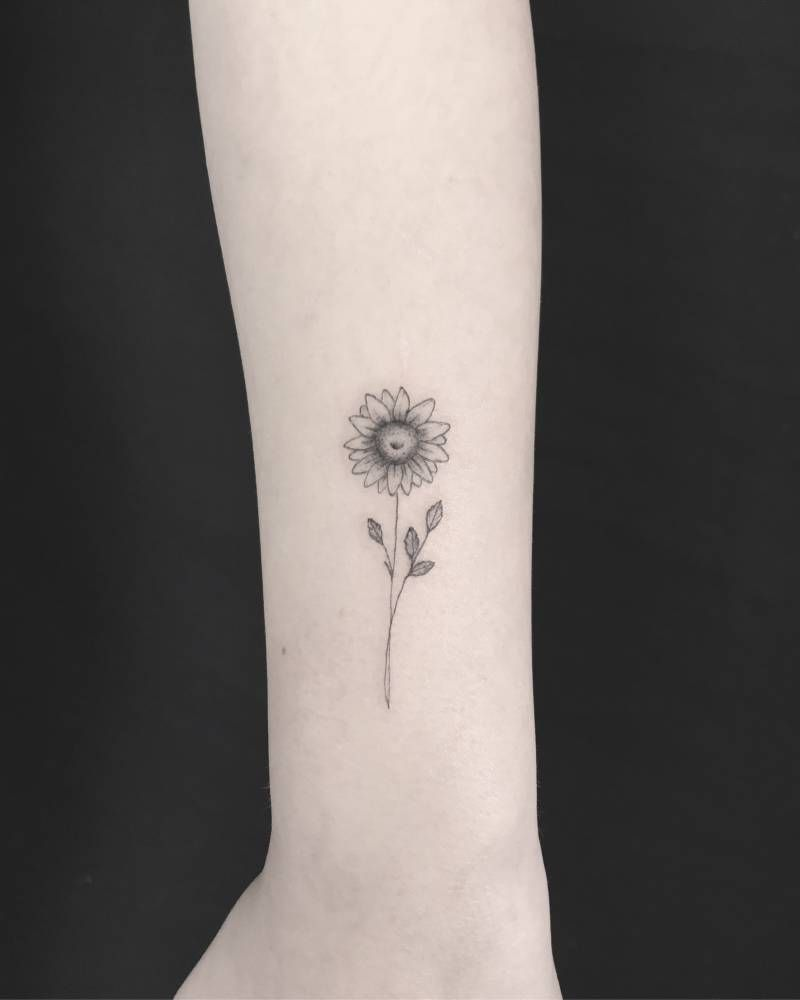 Photo of Delicate sunflower.