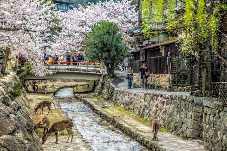 A complete visitors guide to Melbourne   Japan travel, Day ...