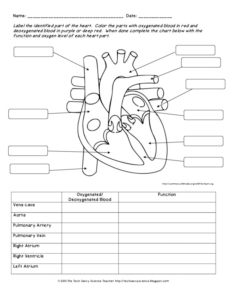 Image Result For Heart Labeling Worksheet With Images Human