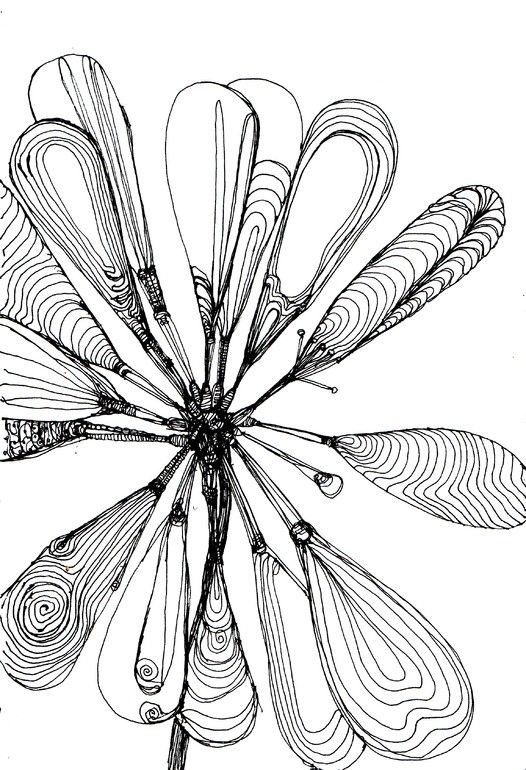 Miki Sandorov Continuous Ink Line Drawing of a Flower Floral