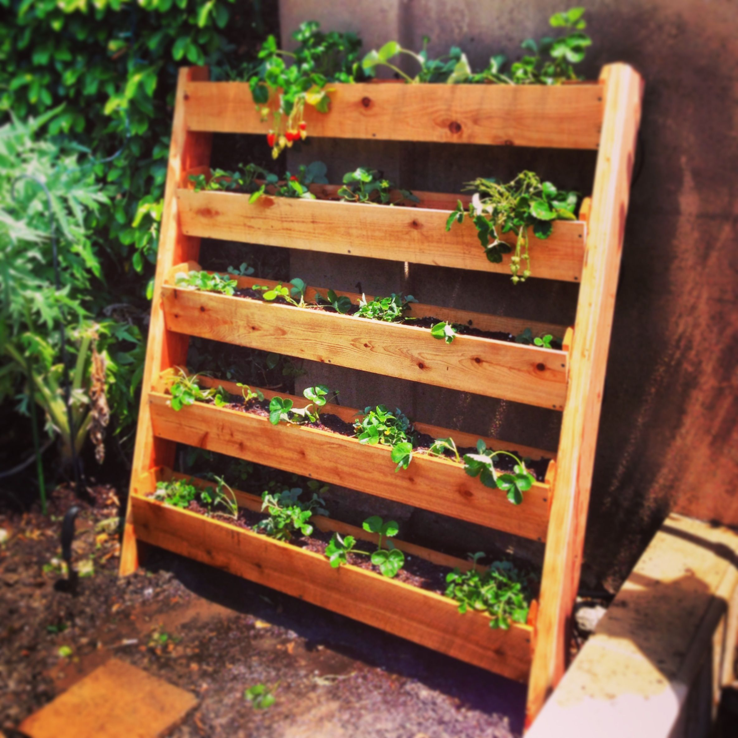I built this vertical strawberry garden out of cedar fence for Vertical garden planters diy