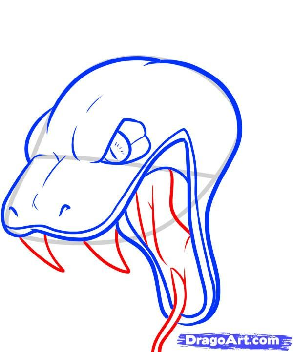How To Draw A Snake Head Draw Snake Heads Step 10 Snake Drawing Snake Painting Drawings
