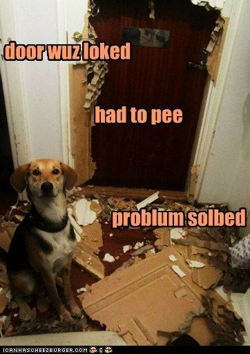 Gives New Meaning To The Phrase House Broken Funny Animal