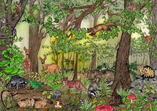 Naturdetektive für Kinder - www.naturdetektive.de: Wald - Die Lebensgemeinschaft