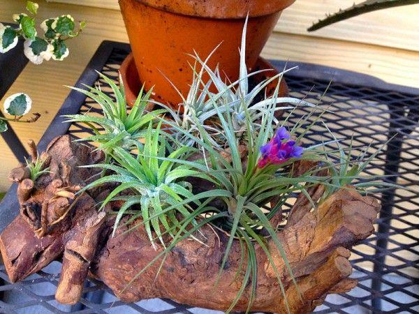 Oplatwy Piekno Z Powietrza E Ogrodek Plants
