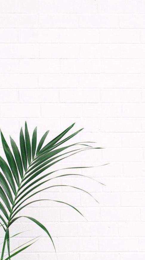 Lock Screen Wallpapers — Fake plant walls! #cutelockscreenwallpaper