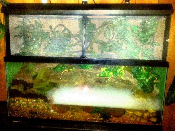 Chinese Water Dragon Terrarium With Live Plants Waterfall
