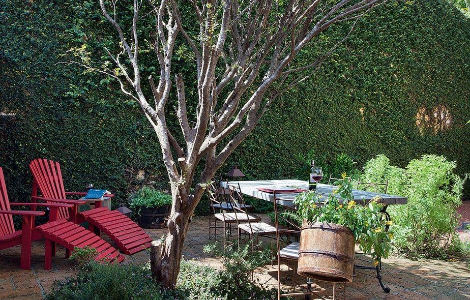 A unha-de-gato, que tomou conta do muro, era o único elemento verde no quintal. Com a interferência dos paisagistas Fabio Lorente e Izabel Possato, pés de manjericão, nectarina e limão-siciliano crescem – e dão flores e frutos – nos recortes no piso