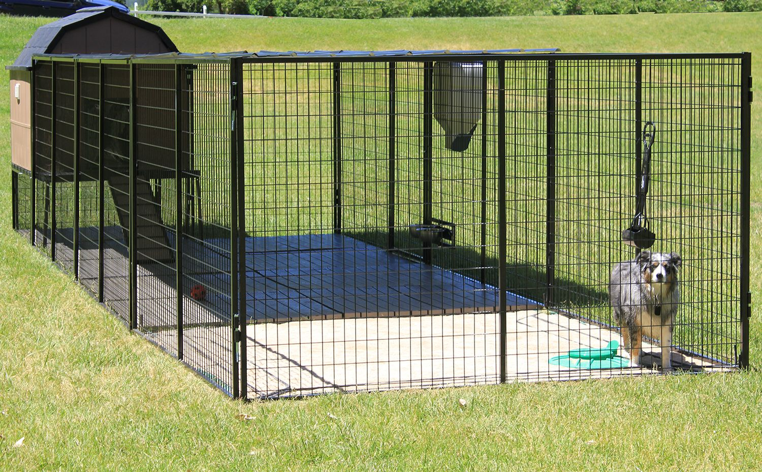 Ultimate Dog Kennel With Australian Shepard Dog Kennel Large