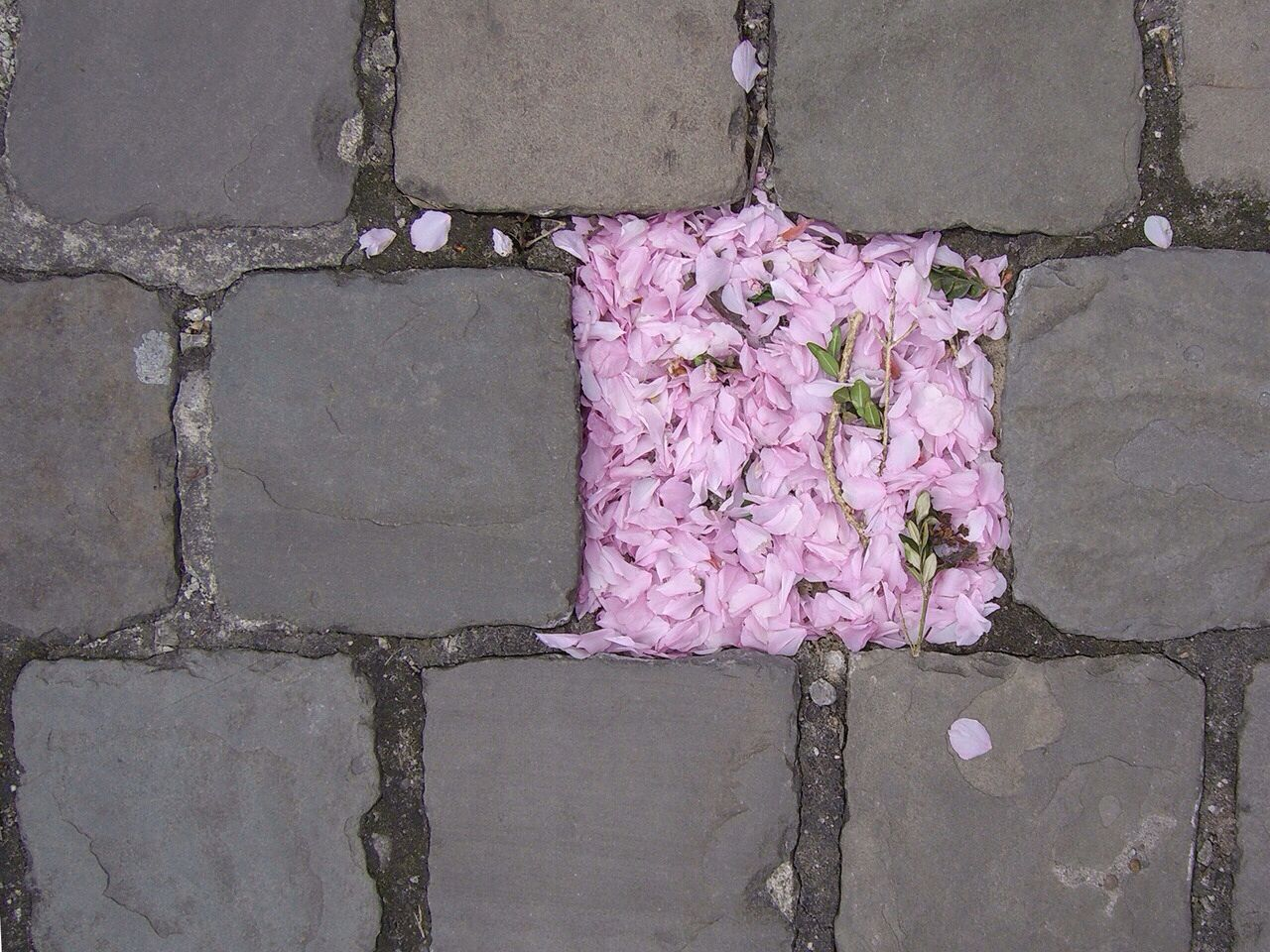 Square of pink