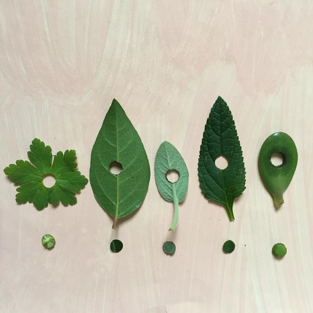 collection of punched leaves