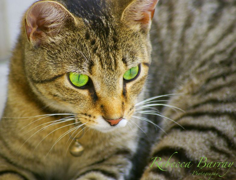 Whiskers on Kittens by Rebecca Barray