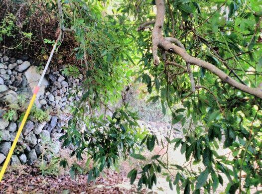 Muros de piedra seca y aguacateros La Atalaya El Tanque