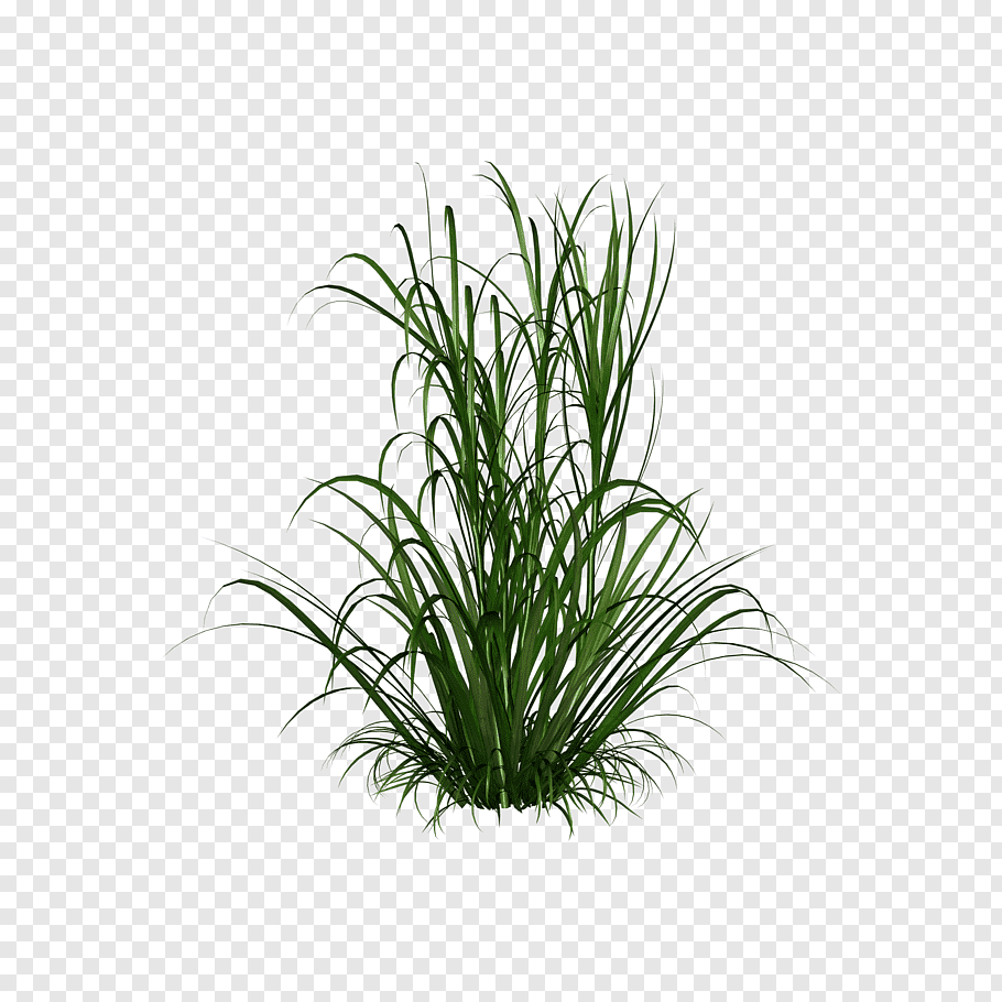 Grass Png Image Green Grass Png Picture Liked On Polyvore Featuring Grass And Greenery Grass Dslr Background Images Photo Background Images