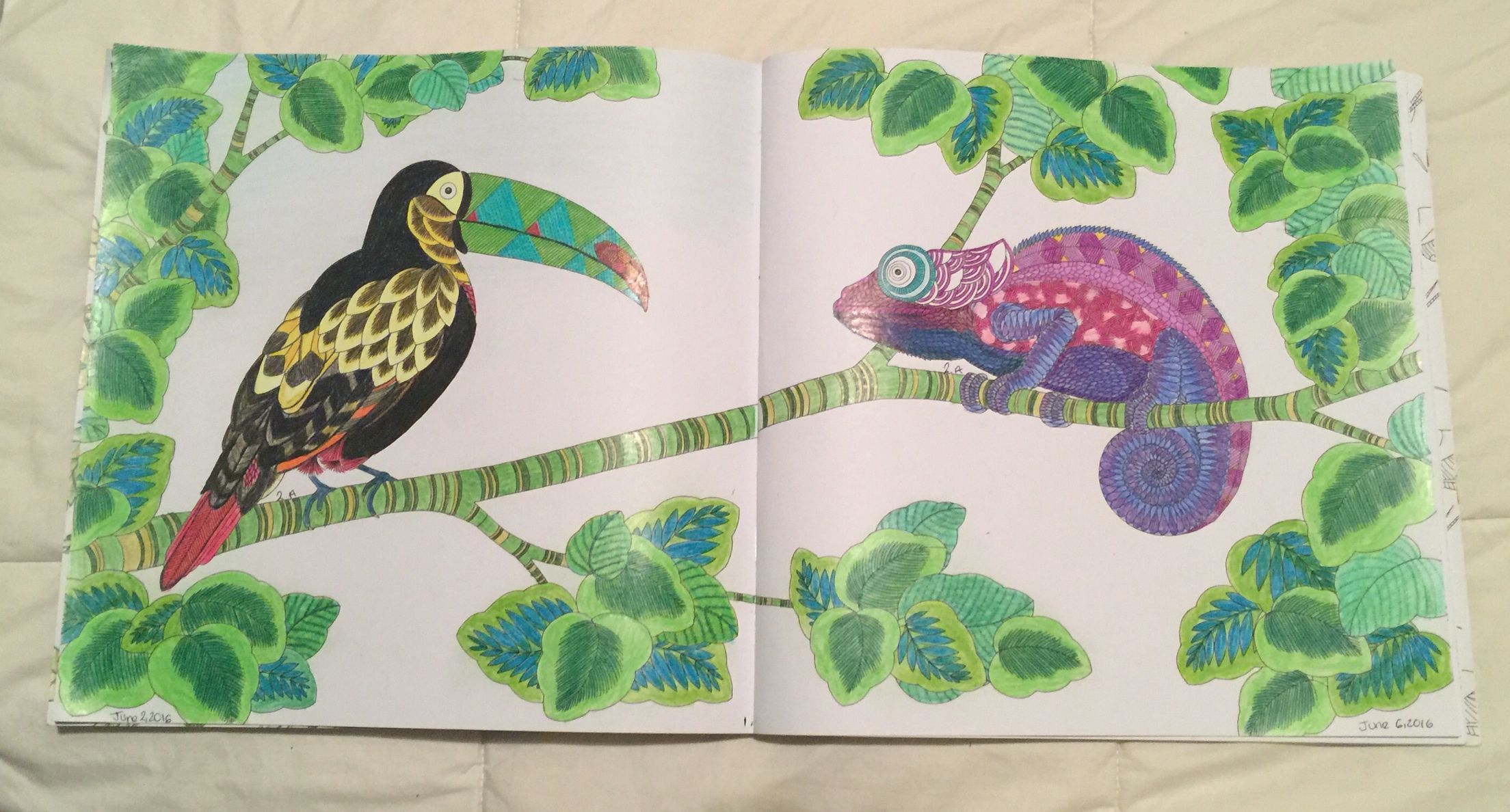 Animal Kingdom Millie Marotta Colouring Book Toucan Bird Chameleon Adult