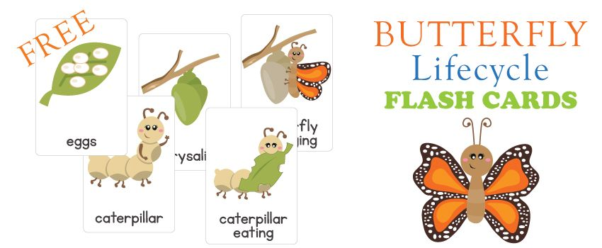 "Freebie Friday is here! Today I have a ""Life cycle of a Butterfly"" set of flash cards for you. These images are from the lovely Kari Bolt.   There are 5 cards i"