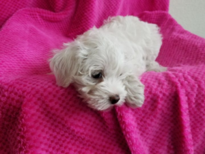 Dog Breeders vs Rescue Adoptions – Where to Find Your Perfect Pup #petadoption