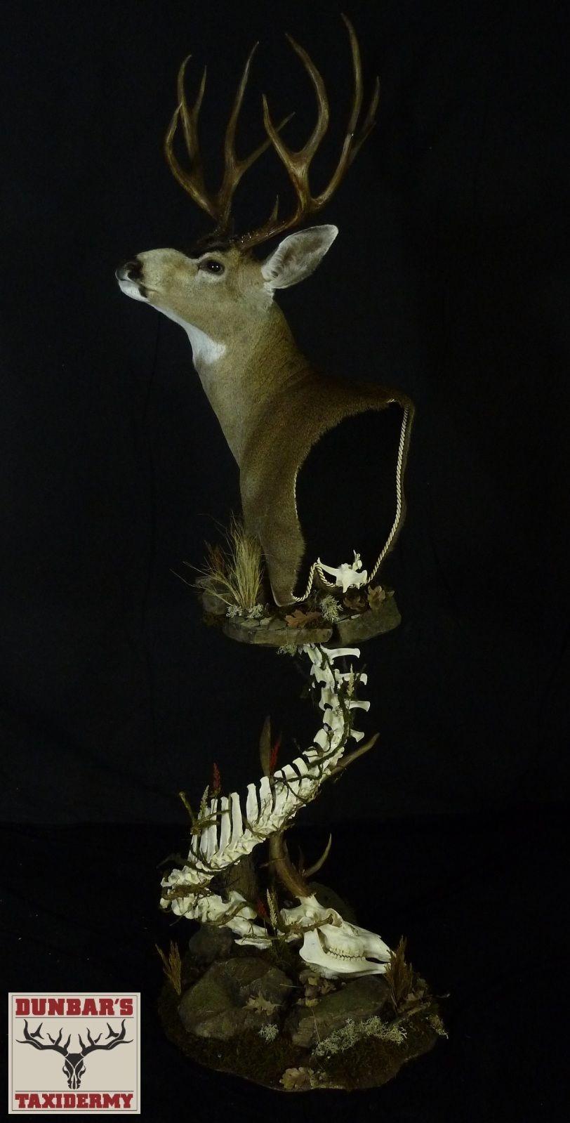 Pin by Tori WilkinsonLittle on Taxidermy Taxidermy art
