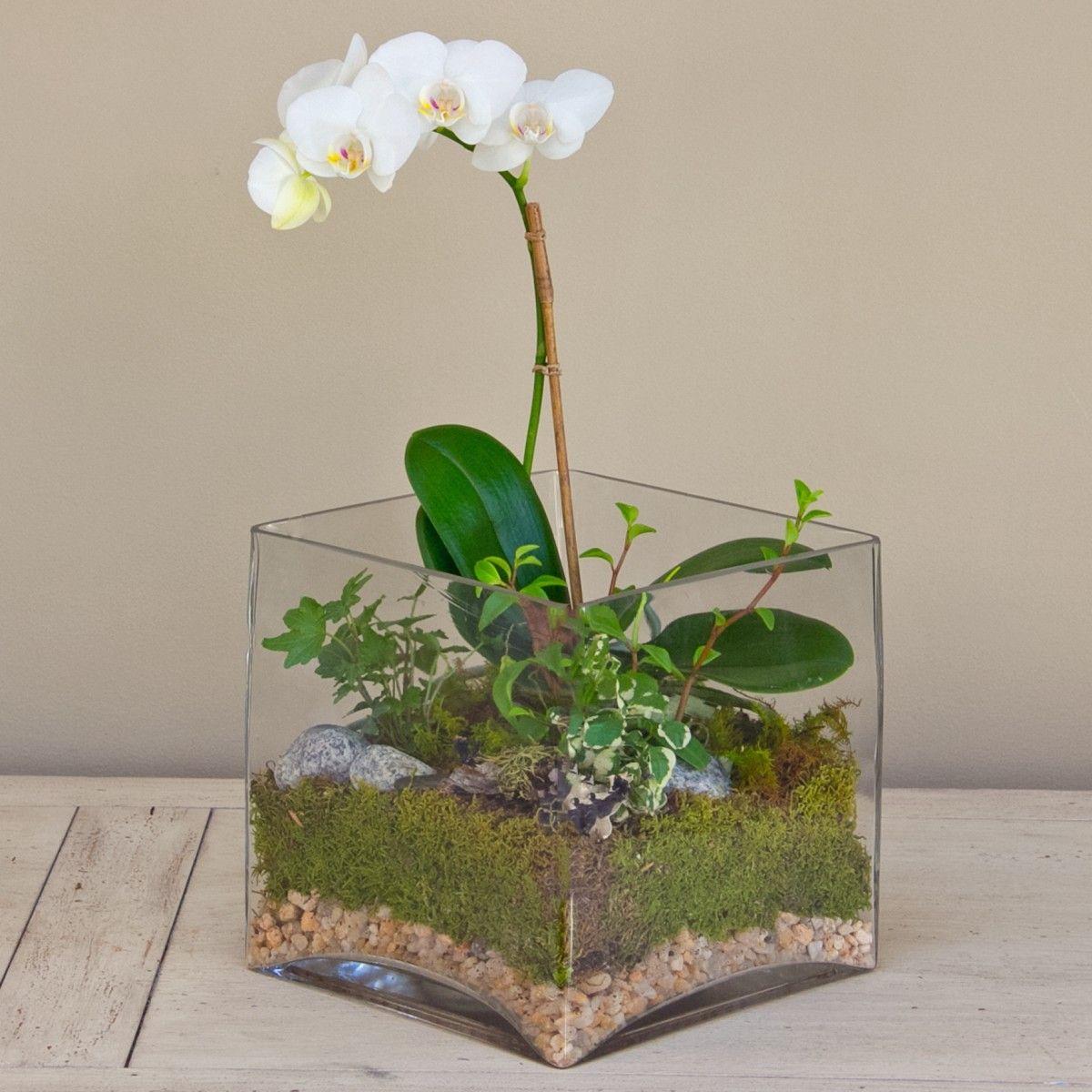 Orkide Terrarium Google Da Ara Diy Orchids Orchid Terrarium