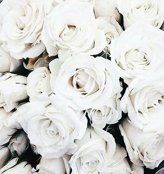 Pin Di Valerie Su Fleurs Bouquet Flowers Blanches White Fiori Bianchi Rosa Bianca Foto Di Sfondo