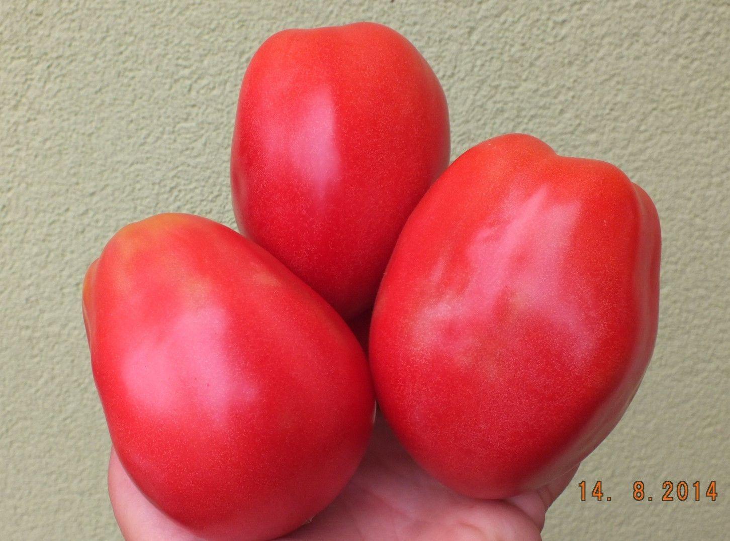 oslinie ushi donkey ears tomato seeds will be available