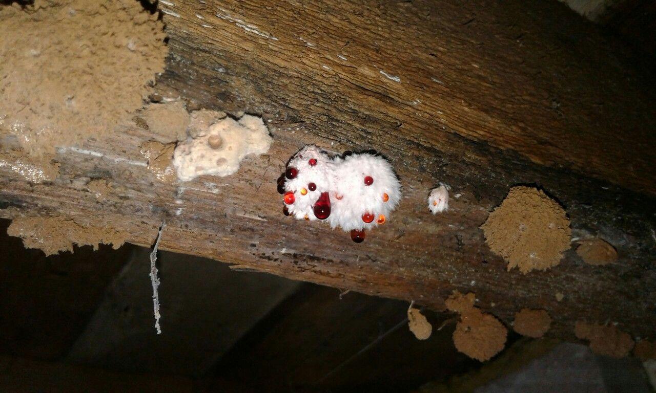 Cellar Fungus & Cellar Fungus | Building Preservation | Pinterest