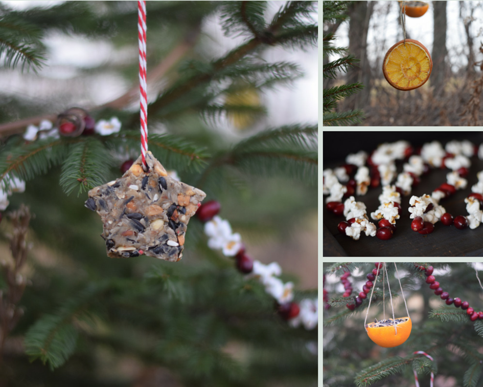 Decorating An Outdoor Edible Tree For The Animals Wilder Child Outdoor Christmas Tree Edible Ornament Edible Tree Decorations
