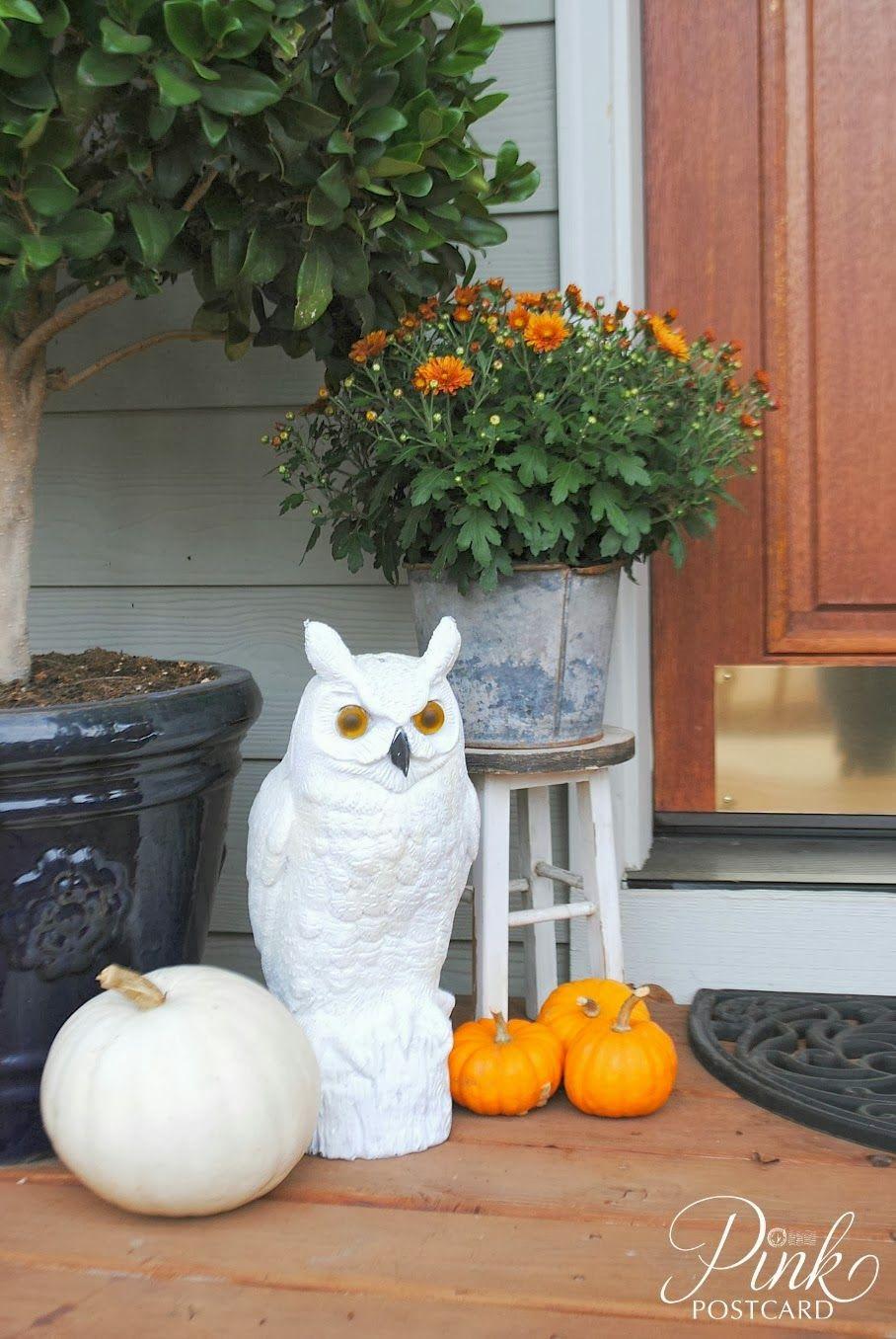 owl.jpg 908×1,356 pixels