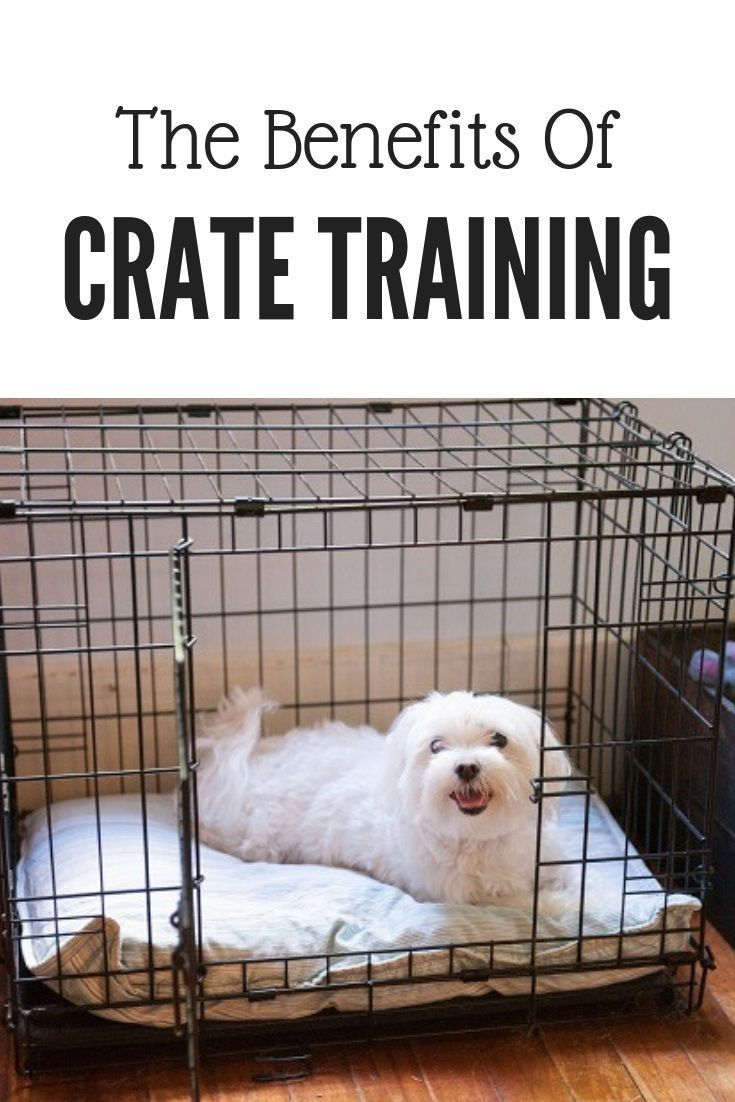 How Long Can A Dog Stay In A Crate At Night References