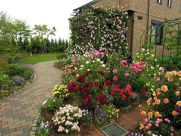 Landscaping with roses pictures image results for Rose garden design