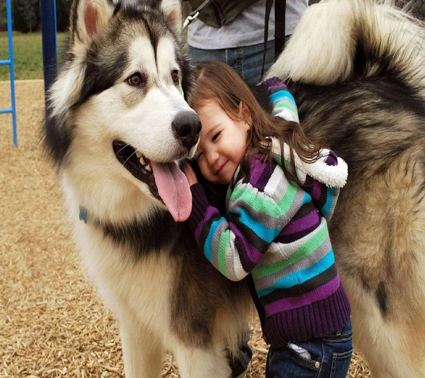 Pin By Ahana Roy On Fur Babies Malamute Dog Dogs Kids Animals