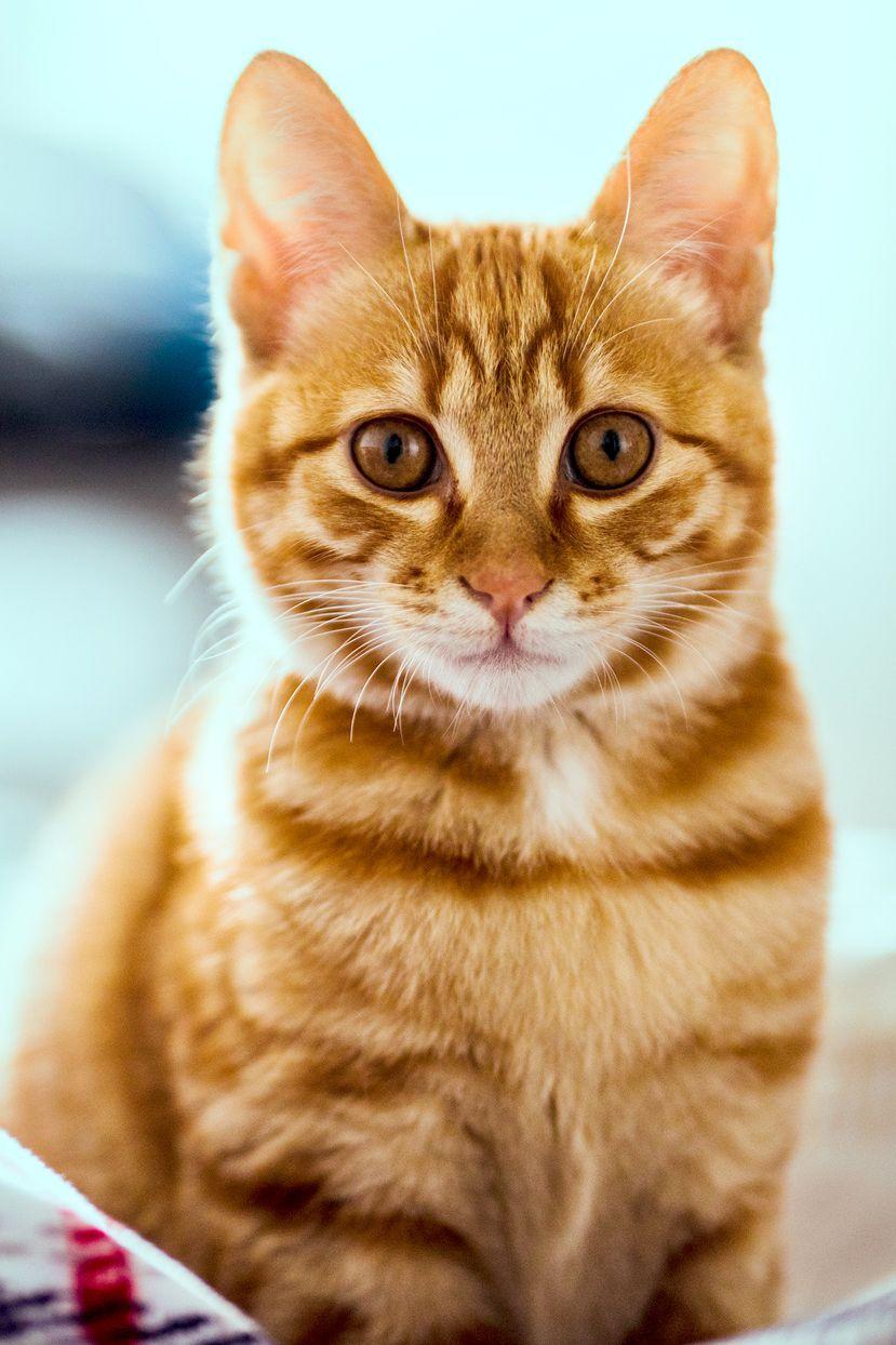 50 Orange Cat Names As Vibrant As Your Feline S Personality In 2020 Cat Names Orange Cat Orange Kittens